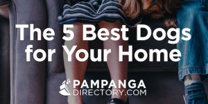 The 5 Best Dogs for your Home