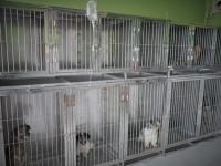 Buan Veterinary Clinic 15.jpg