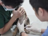 Buan Veterinary Clinic 20.jpg